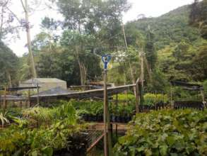 Nursery irrigation