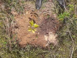 Critical care for baby trees