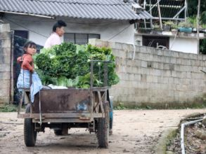 Bringing in a harvest of veggies