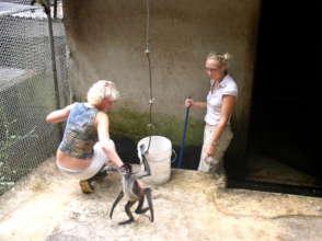 Feeding the spider monkeys