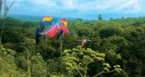 Rescue Endangered Wildlife in Guatemala