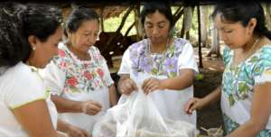 Indigenous women save the sacred Mayan bee
