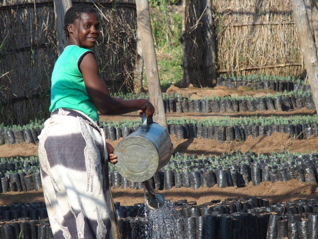 Forest restoration for biodiversity in Malawi