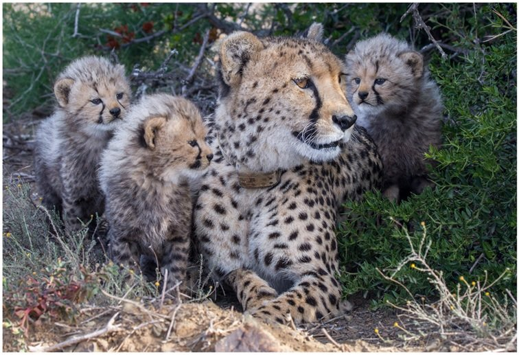 Big Move for Cheetah Experience!!
