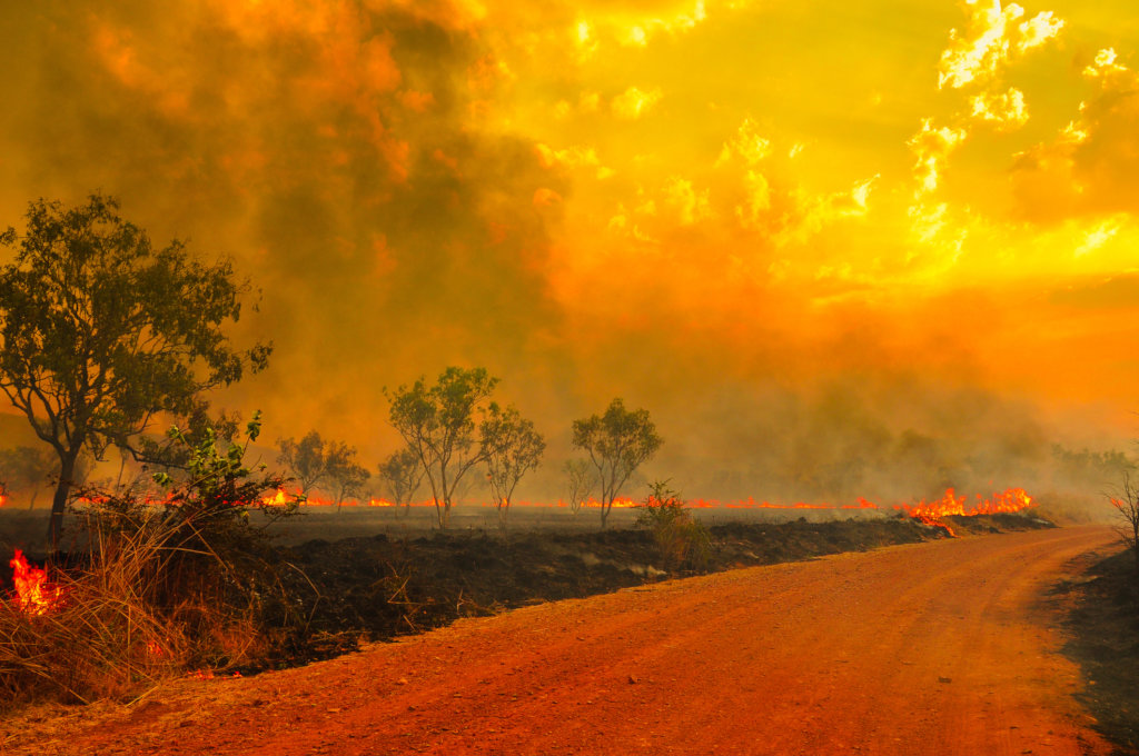 Australia Wildfires Relief Fund