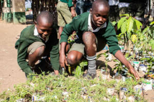 Environment in Education: Planting 100,000 Trees