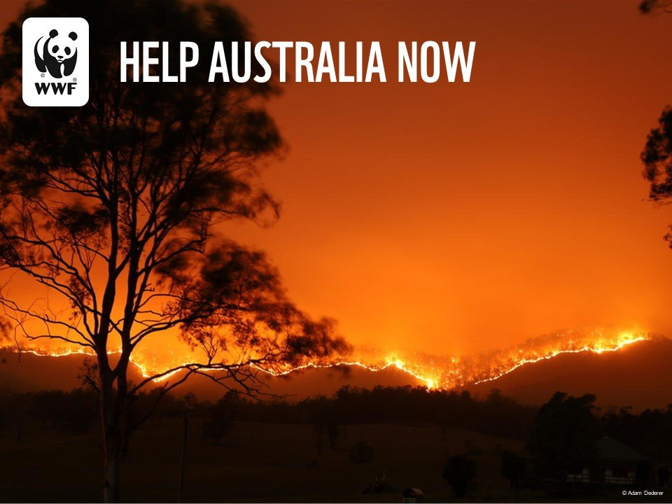 Support WWF's Response to Australia's Wildfires