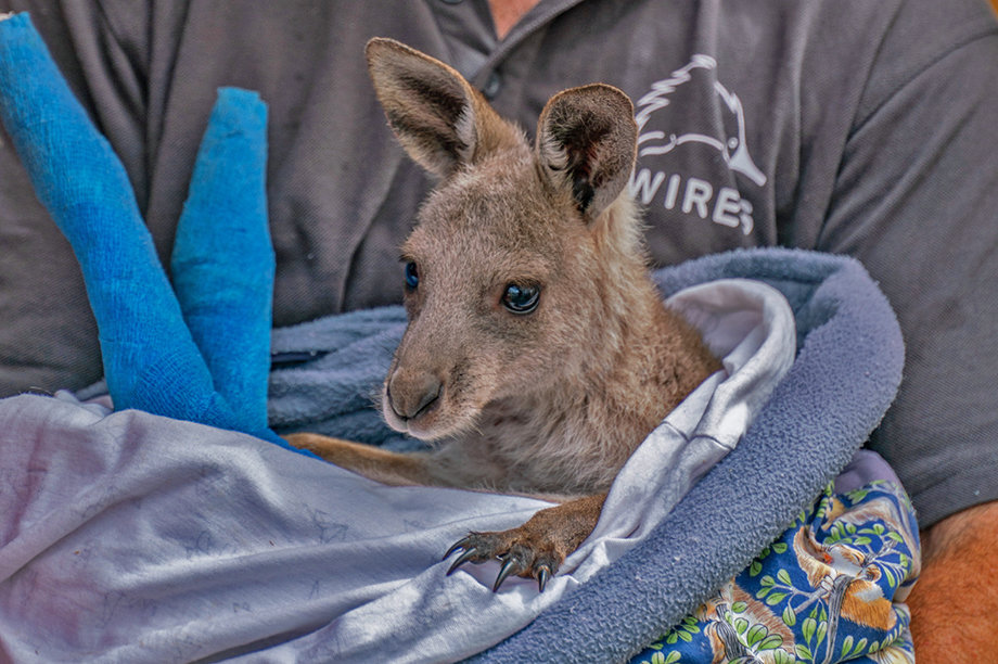 Support Australian wildlife rescue to release