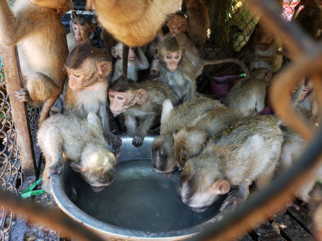 Emergency funding to care for 500+ rescued animals