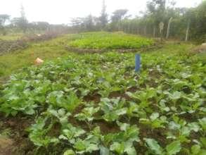 Adult Program vegetable garden