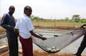 Fish breeding project