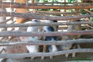 3 little piglets