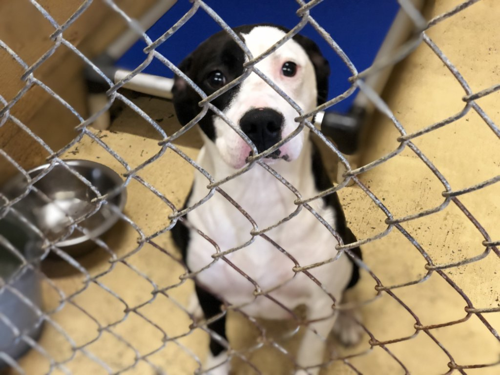 Build a Shelter for Homeless Animals like Bailey