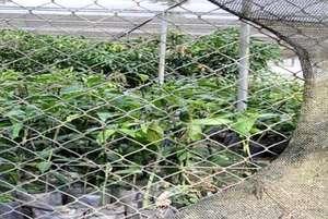 Fruit tree nursery project