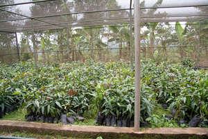 Fruit tree seedlings