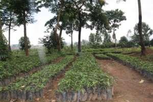 Indian Mango seedings your Gift Gave Us!
