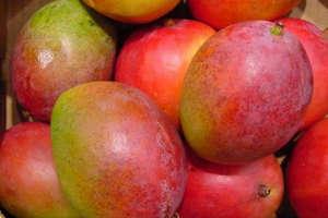Indian Mango fruit