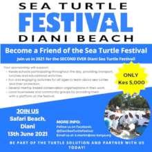 Become a Friend of the Sea Turtle Festival