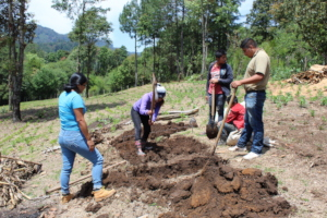 Follow-up to planting vegetables with Solmundi