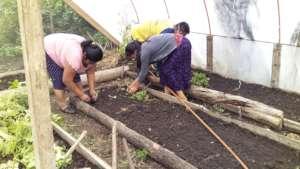 Vegetable workshop