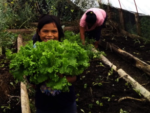 Improve quality of health and education in Mexico