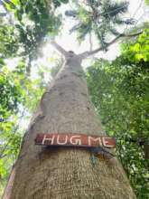 Save 10 acres of biodiverse forest in Sri Lanka