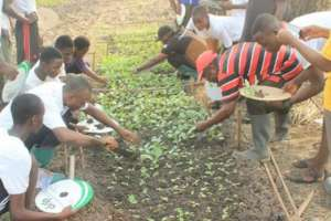 School farms: Experiential learning & school meals