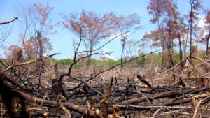 Effects of fire on the Maya Golden Landscape