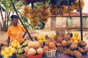 Manita small fruit stand flourishing