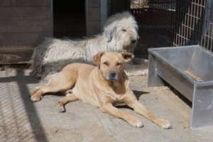 dogs lie in the sun with food trough