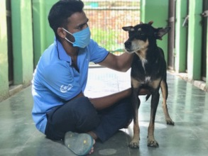 TOLFA staff in mask caring for dog in our kennels