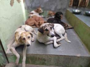 Some of the 300 dogs we help during Urs festival