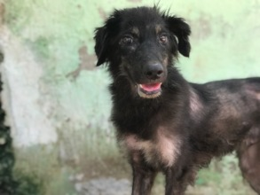 Dog with mange rescued from the city streets