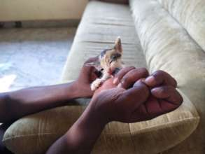 Tiny kitten being hand-reared by dedicated staff