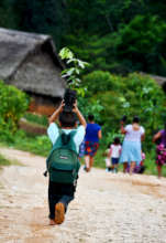 Community Reforestation in Southern Belize