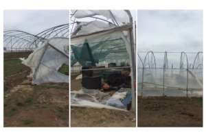 Damaged and Destroyed Greenhouses