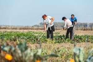Social Farm Beneficiaries