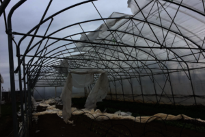 Greenhouses Destroyed During COVID-19 Crisis