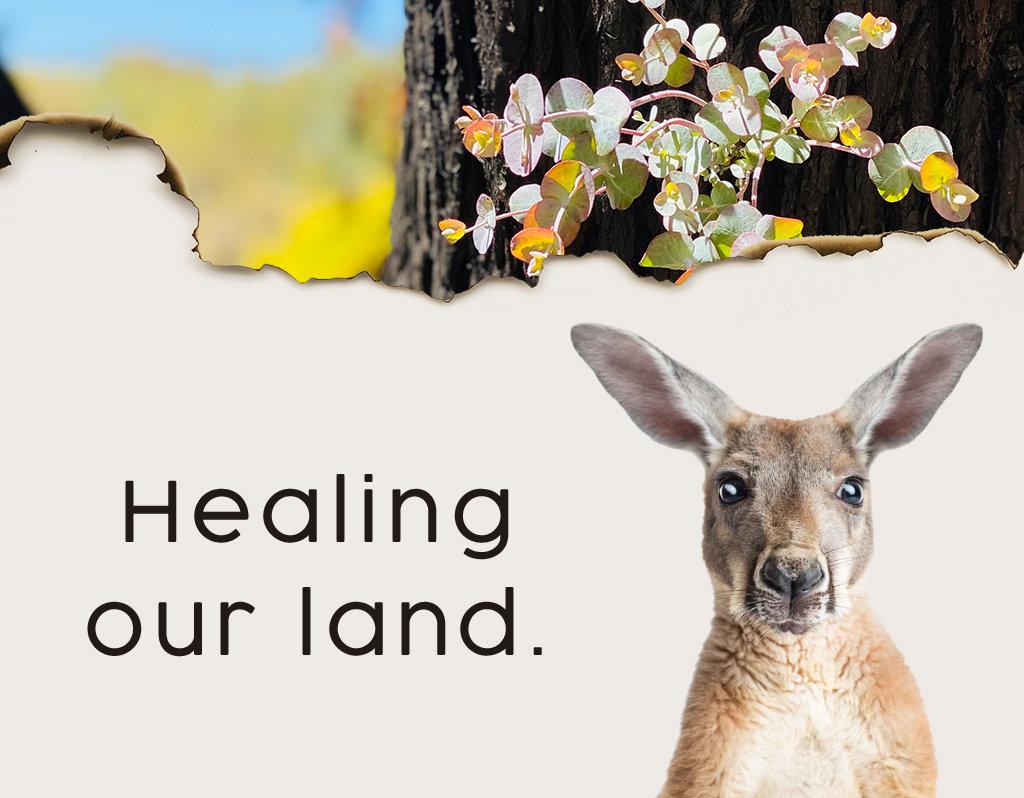 Healing our land - Bushfire Recovery
