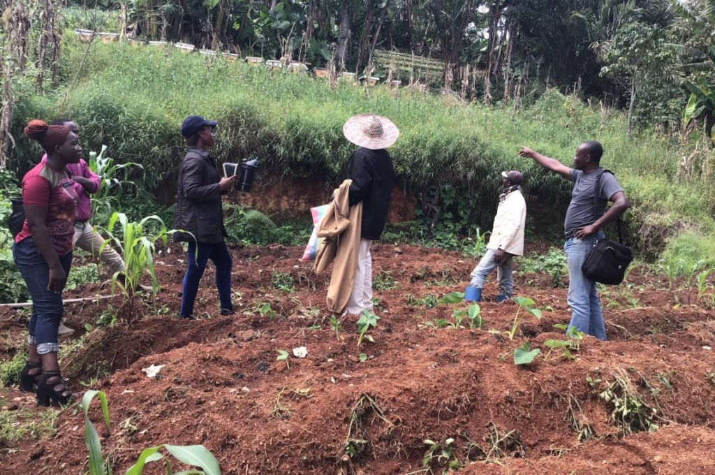 Support Community Green Engagement in Cameroon