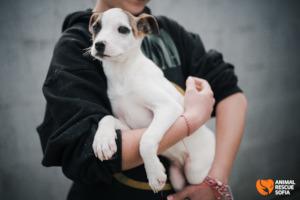 One of Dara's Pups