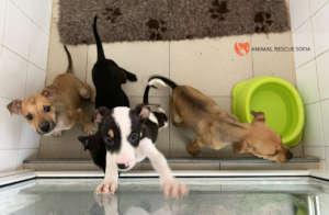 Puppies under quarantine