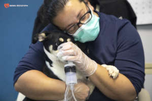 A dog carer and a patient