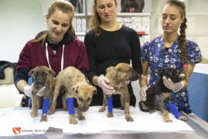 Hundreds of rescued puppies