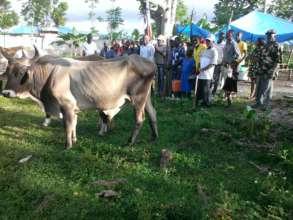 naming the oxen: Patience, confiance, Dieu si bon,