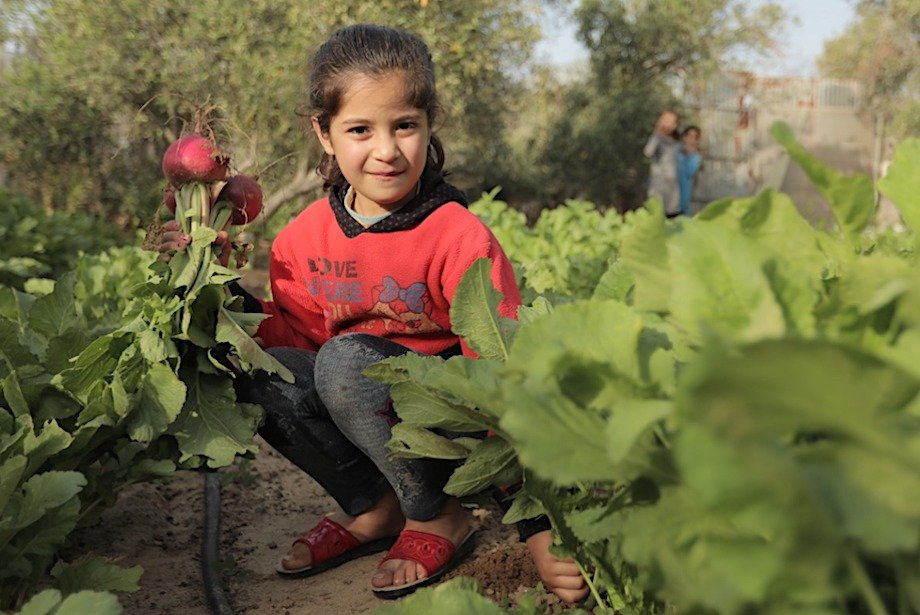 Gardens, Goats, and More: Climate Action Palestine