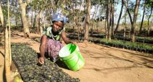 Transitioning villages to agroforestry in Tanzania