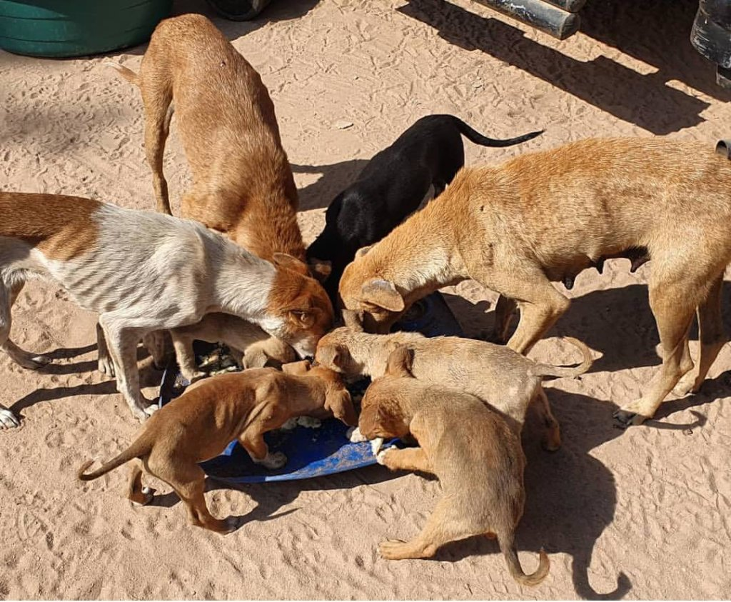 Keep dogs from Starvation during Covid-19 in SA