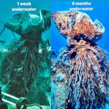 Underwater Captain benthic growth- 6 month mark