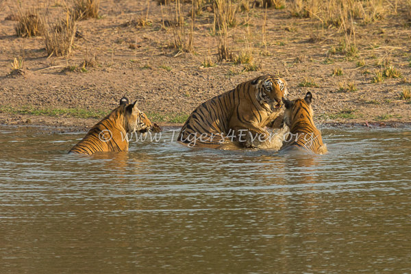 Water for Bandhavgarh's Tiger Protectors